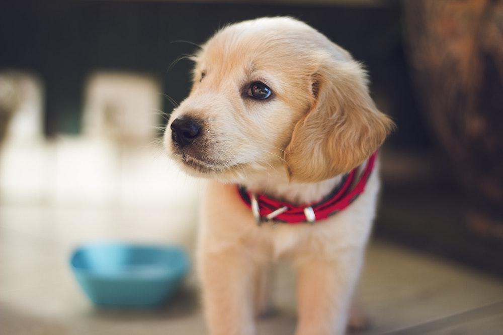pet health insurance Gallatin TN